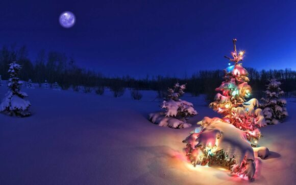 Christmas-Tree-Nature-Moon-Night-Scenes-HD-Wallpapers